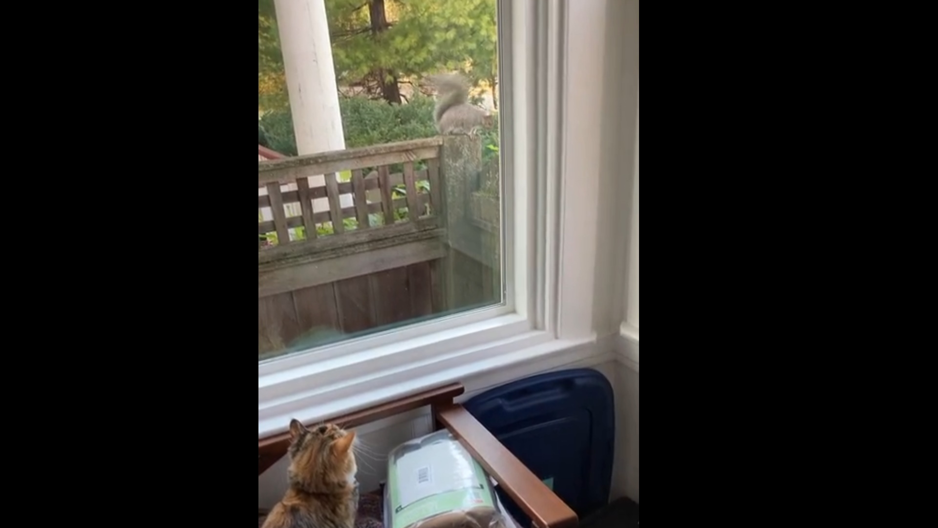 Harassed by a squirrel
